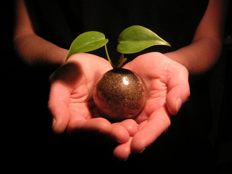 If You Plant: an ethical parable